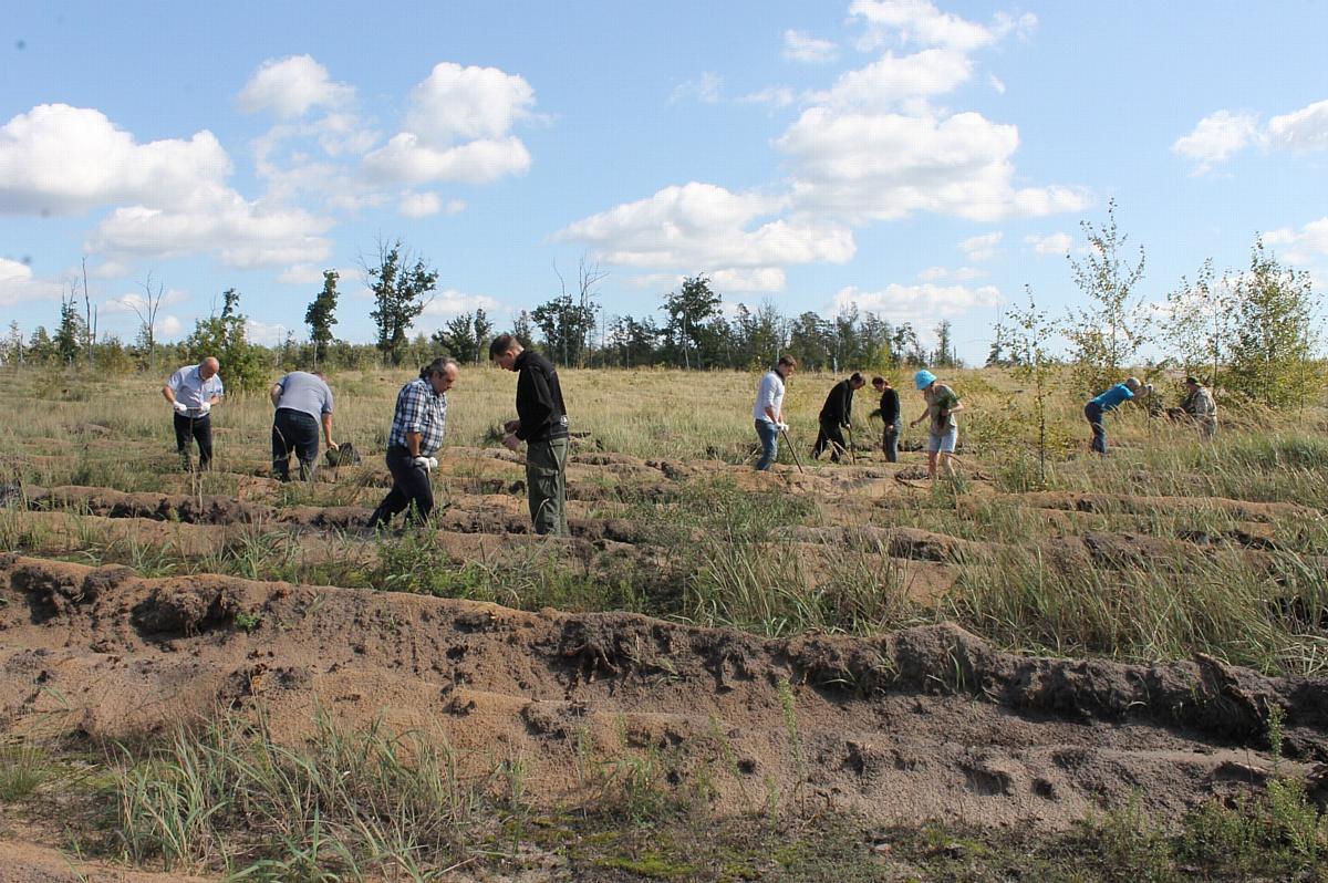 Активисты Народного фронта высадили сосны на окраине Воронежа