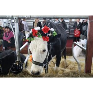 Ивановские сельхозпредприятия на агропромышленной выставке «Золотая осень-2015»