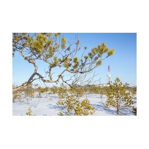«Аганнефтегазгеология» реализует экологические программы