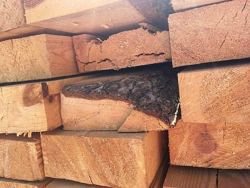 Большой черный еловый усач выявлен в партии лесоматериалов агрономами Астраханского филиала