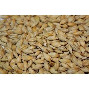 Фермер неправильно хранил зерно
