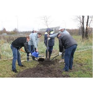 Активисты ОНФ высадили более 500 деревьев у полигона «Новоселки» в Санкт-Петербурге