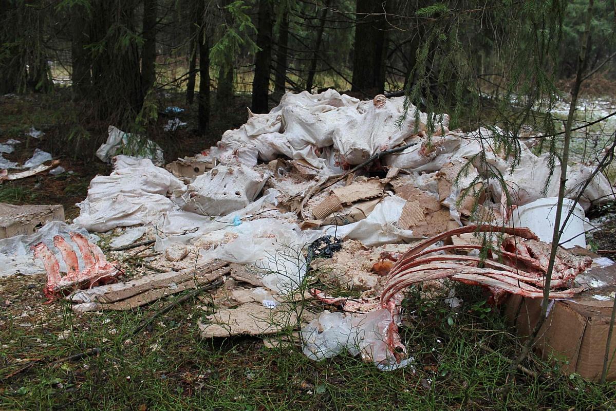 Активисты ОНФ обнаружили свалку с биологическими отходами в черте Кирова