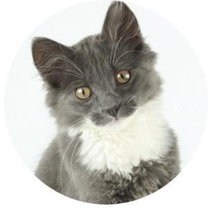 Расстройство ЖКТ у домашней кошки. Что делать?