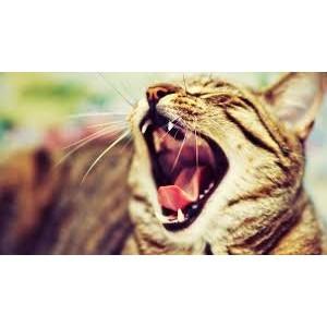 О болезнях кошек, которые могут передаваться человеку