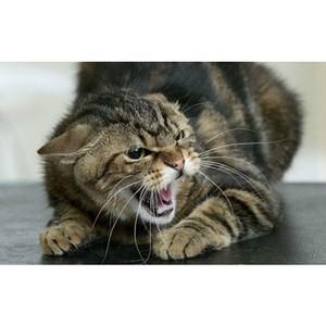О профилактике бешенства животных