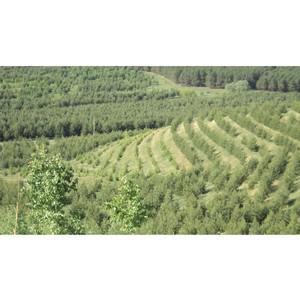 KASTAMONU направила на природоохранные мероприятия 19,5 млн. руб.