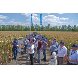 Новости селекции в борьбе за урожай