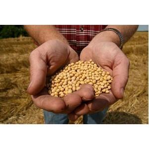 Об обеспечении безопасности и качества зерна и продуктов его переработки за 5 месяцев 2016 года