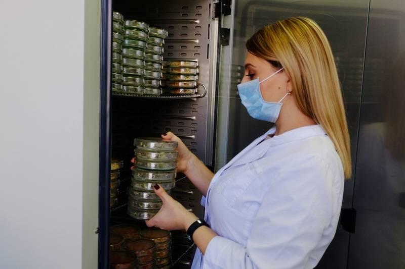 Об обнаружении фомопсиса подсолнечника в 2,6 т семян из Франции