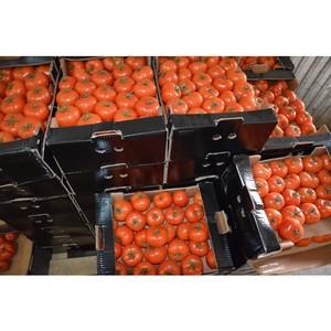 В Оренбурге выявлена очередная партия «санкционных» овощей