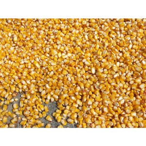 Высеяны семена озимой пшеницы с неопределенными сортовыми и посевными качествами