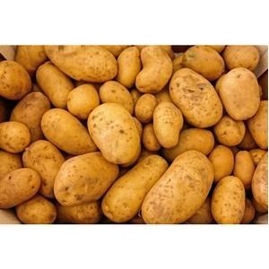 Ярославский картофель отправится в Крым
