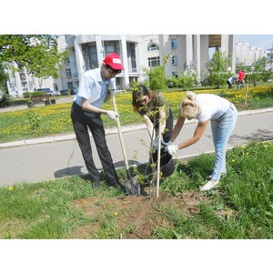 Работники Костромаэнерго высадили новые деревья на «Аллеях энергетиков»