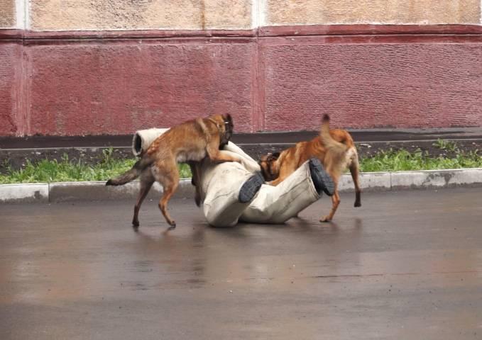 Кинологи кузбасского ГУФСИН провели показательные выступления со служебными собаками для жителей Кемерово