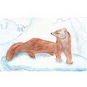 В конкурсе рисунков «Баргузинский соболь» участвовали почти 100 юных художников