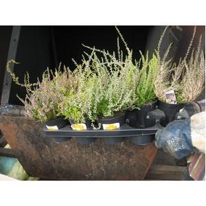 Горшечные растения в количестве 90 штук были уничтожены методом сжигания