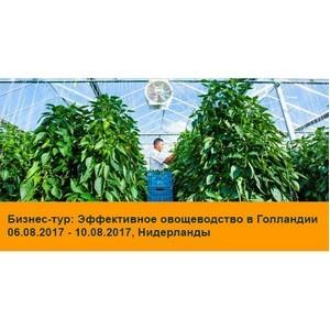 """Бизнес-тур в Нидерланды """"Эффективное овощеводство в Голландии"""" 6 – 10 августа 2017 года"""