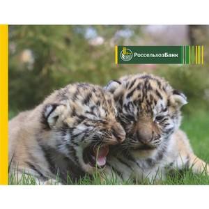Удмуртский филиал Россельхозбанка выпустил более тысячи карт «Амурский тигр»