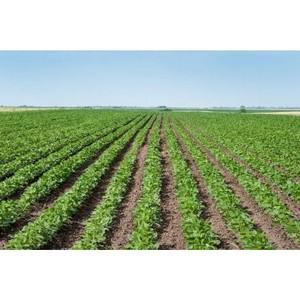 Проект создания агропромышленного кластера по выращиванию и переработке сои в Саратовской области