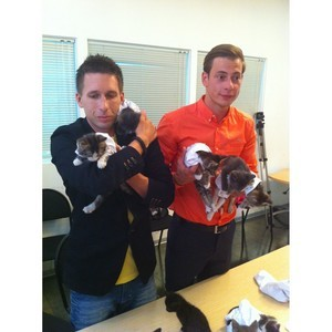 Котята-«футболисты» и собаки-«судьи» срочно ищут новый дом
