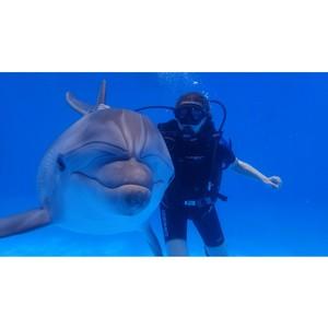 Дельфинарий «Немо» в Анапе