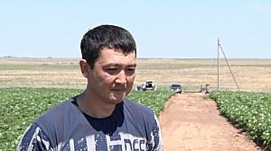 В Астраханской области продолжается мониторинг КВО на полях