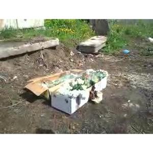 Россельхознадзор уничтожил более 1000 зараженных хризантем