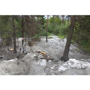 В Кирове неизвестные забетонировали участок леса