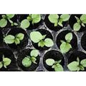 На рынке Машмет филиала «Рынка Южный» торговали нелегальными семенами