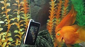 ����-���� ������������ ��������� Sony Ericsson ST17i Xperia Active � �������