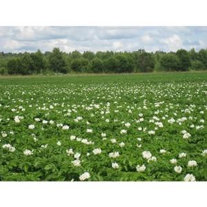 Для высева в 2015 году хозяйство использовало только сортовые и кондиционные семена