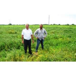 О зарастание посевов люцерны опасным сорняком