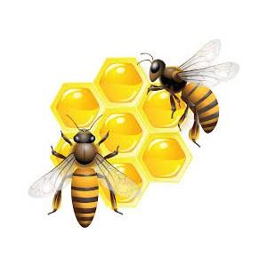 Профилактика болезней пчел!