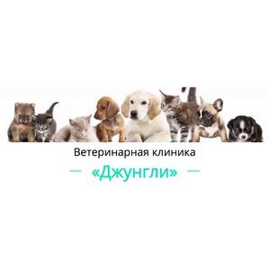 Ветеринарная клиника  Джунгли – современная круглосуточная клиника в Москве  (метро Коломенское)