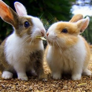 За массовую гибель кроликов в Ленобласти заплатит производитель комбикорма