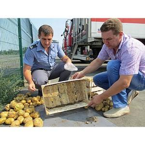 1780 случаев заражения подкарантинной продукции выявлено в РО за апрель 2016 г.