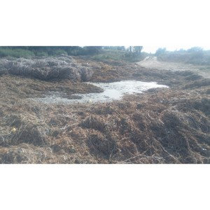 јктивисты Ќародного фронта вы¤вили проблему незаконного слива жидких бытовых отходов в ¬олгограде