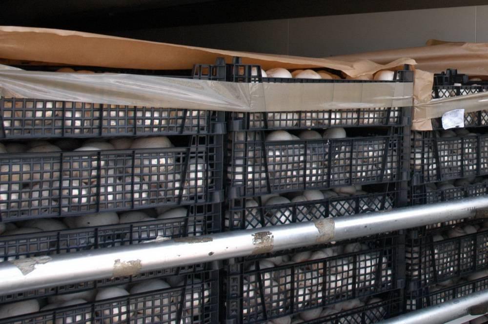 180 тонн санкционки попали в «сети» мобильных групп на территории  Смоленской области