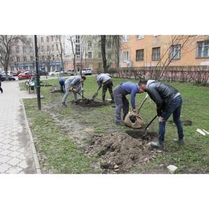Команда «Молодежки ОНФ» высадила деревья в Депутатском сквере Воронежа