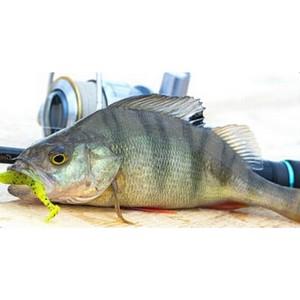 Всё для рыбалки и отдыха