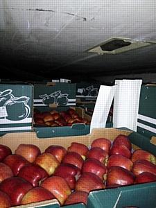 Смоленские таможенники ставят барьер на пути санкционных товаров