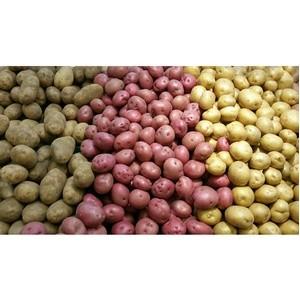 Нематициды последнего поколения откроют точки роста картофелеводства