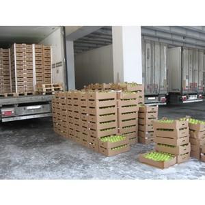 Попытка ввоза 150 тонн санкционных яблок обернулась их уничтожением