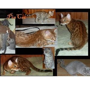 Бенгальские котята! Открываем глазки!
