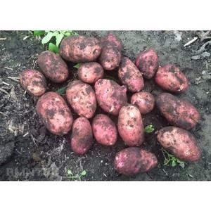 Сельскохозяйственный потребительский сбытовой кооператив «Кубанский»