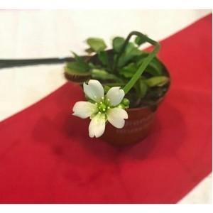В зоопарке Новосибирска расцвело необычное растение
