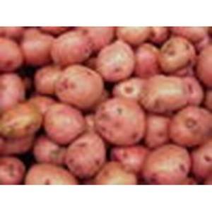 Эксперты Россельхознадзора проверят подготовленный к отправке в Россию семенной картофель