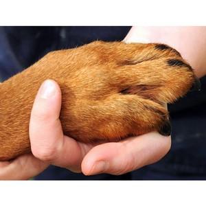 Правительство РФ отказало в поддержке законопроекта о защите животных