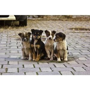 ОНФ: Стоимость услуг по отлову и содержанию бездомных животных в регионах различается в разы